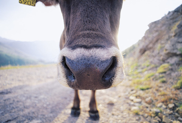 Jens Lucking #inspiration #photography #animal