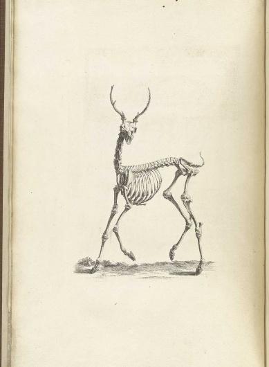 cheselden_p08.jpg (1176×1600) #deer