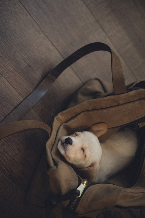 puppy in a bag #puppy #photography