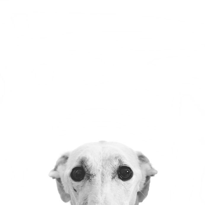 I V A N C A R B O N E L L, http://ivancarbonelldiary.tumblr.com/ #white #eyes #photo #black #dog