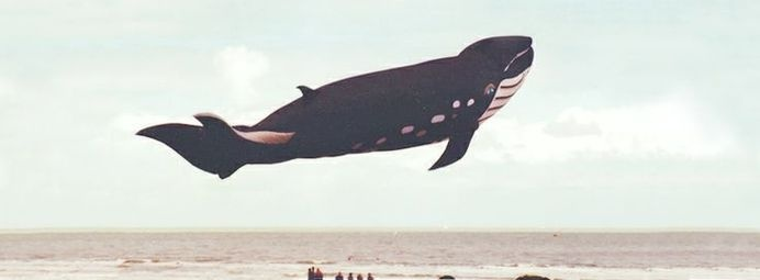 www.larabispinck.com #clouds #whale #freedom #belgium #sea #kite #fly #photography #beach #animal