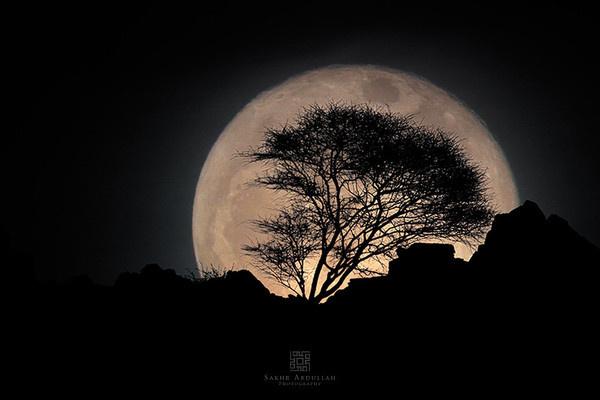 In The Moonlight! #moonlight #shadow