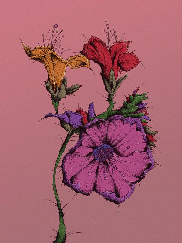 Current Illustrations #flowers