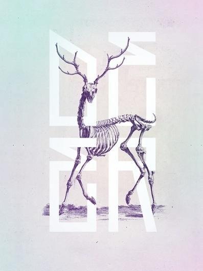 Bone - Anatomy Illustrated #type #skull #book #ilustration