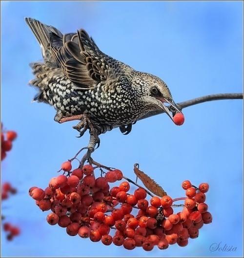 Bird Photography by Anna Solisia | Cuded #solisia #photography #anna #bird