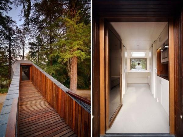 Tree Snake House7 #architecture #house #tree