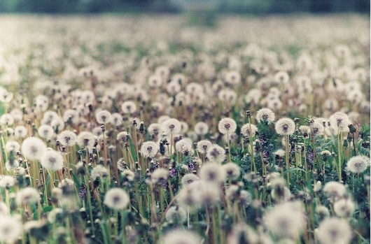 : : moodboard : : #flower