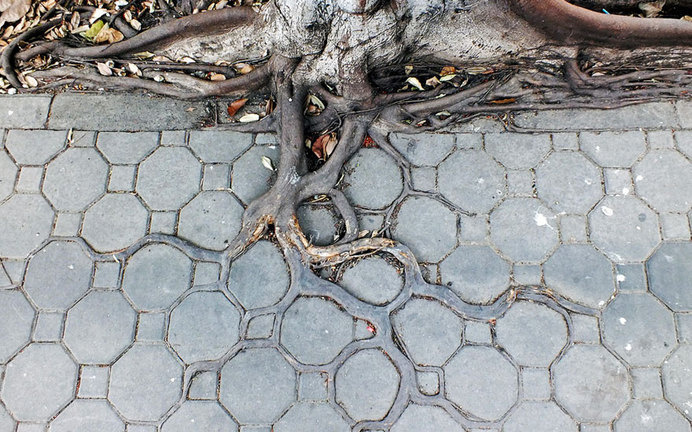 tree-roots-concrete-pavement-2 #root #photography #tree