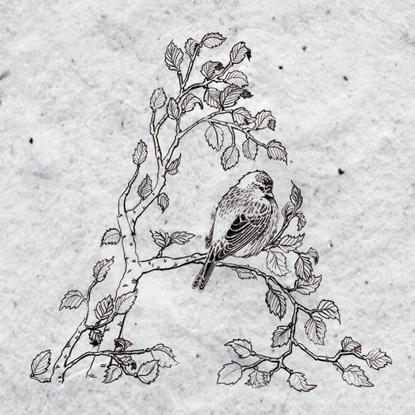 Holt wip on Behance #bird #illustration #nature #drawn #hand
