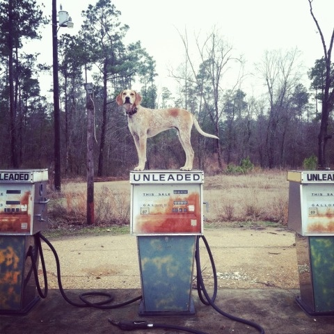 swissmiss | Maddie On Things #photography #gas #dog