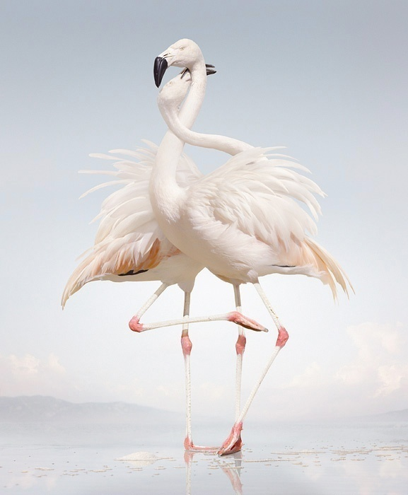 Simen Johan #inspiration #photography #animals