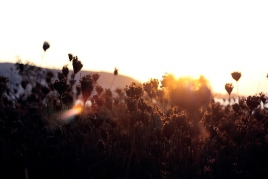 nothingbutpoetry - Les oiseaux de Balthazar #photo #sunset #sunlight #flowers