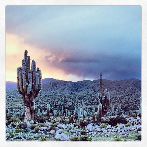 Early morning sun ... Early morning sun in Coctaca, waiting for the Samilantes to come out from their nest…@marcovernaschi #dawn #landscape #photography #rain #morning #cactus #desert