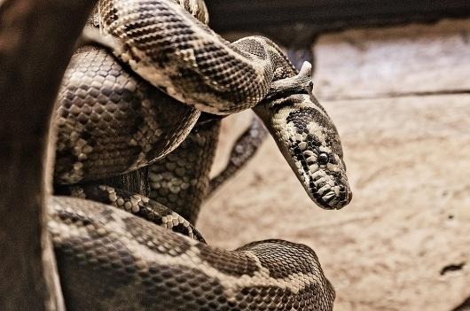 Егор Федоров #snake #egorfedorov #animals