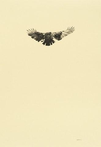 FFFFOUND! | 2011 : Greg Eason #drawing