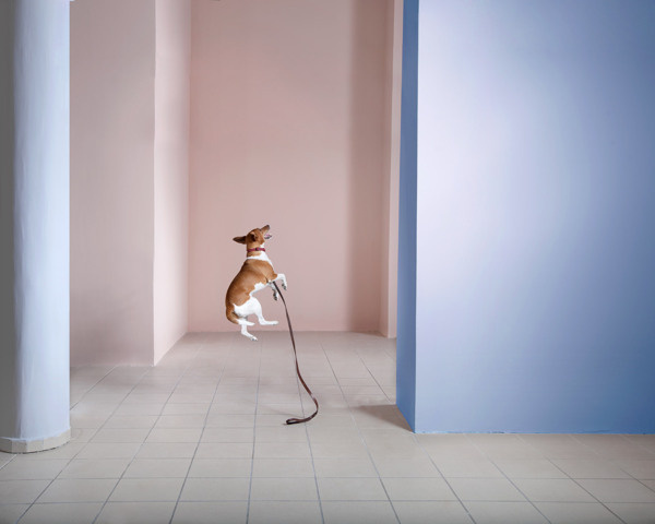 NAMELESS on Behance #reality #floating #dog