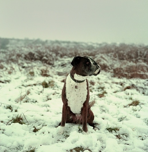Table Forty-One • Photography Collective #wsa #bronica #mitchell #snow #photography #kat #dog