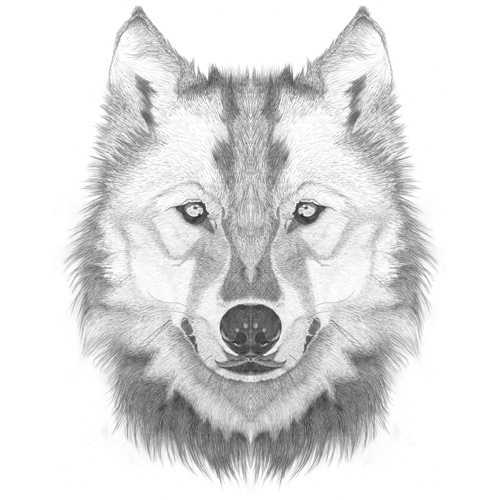 48_adriadeyzaguirremirrorhuskey.jpg (Imatge JPEG, 500x500 píxels) #white #yzaguirre #de #black #mirror #and #animals #pencil #symmetric