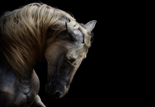 Photography(viamartamara) #horse