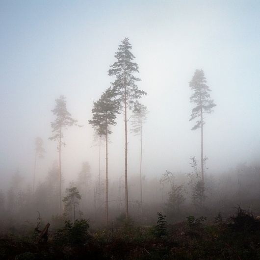 Norwegian wood #3 | Flickr - Photo Sharing!