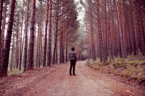 http://eortega.tumblr.com/post/3144547607 #forest #photography