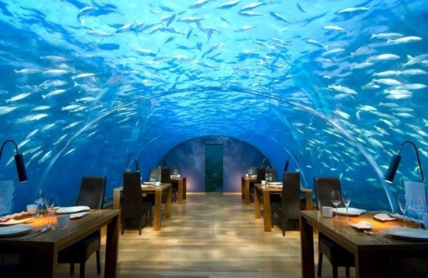 Artistic restaurant – inspiring view from underwater restaurant Ithaa #artistic #view #underwater #restaurant