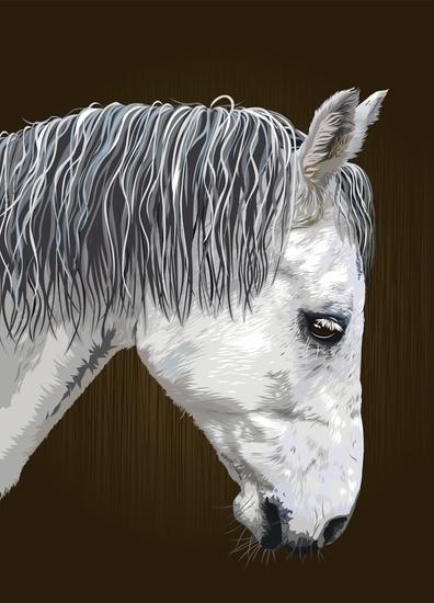 Kilian aka «Look At Me» the II. #horse #fellerer #together #illustration #portrait #forever #marge #friends