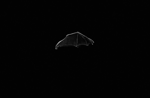 this isn't happiness™ (le Bat), Peteski #wing #bat #dark