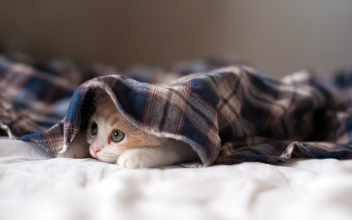 Kitten Under a Blanket #animal #photography #inspiration