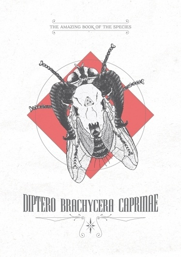 Díptero Brachicera Caprinae : As Ilustrações de Daniel Griza #draw #insect #illustration #skull