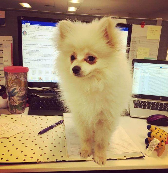 Most Dog Friendly Stores in America - Hudson Belk
