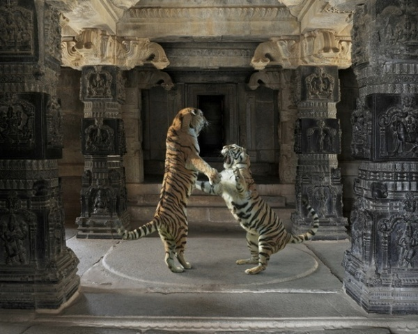 Animals by Karen Knorr #inspiration #photography #animals