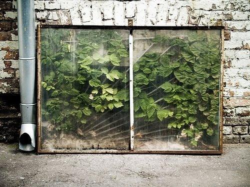 http://b-u-i-l-d.tumblr.com/ #buildsblog #plants