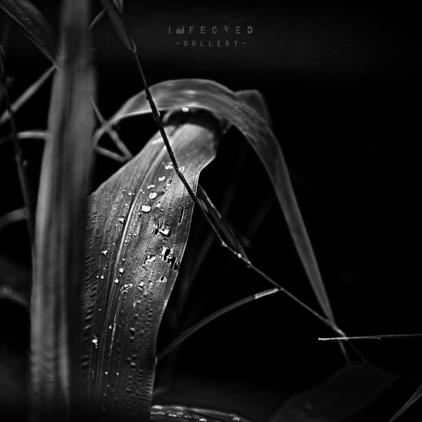 Nature's fresh #gallery #water #leaf #infected #nature #dark #drops