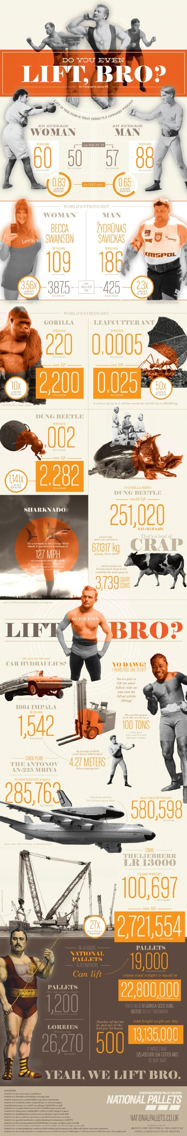 Do You Even Lift, Bro? [infographic] #ant #man #woman #gorilla #pallets #inforgraphics #hydraulics #force #lift #weight #strongest #dung bet