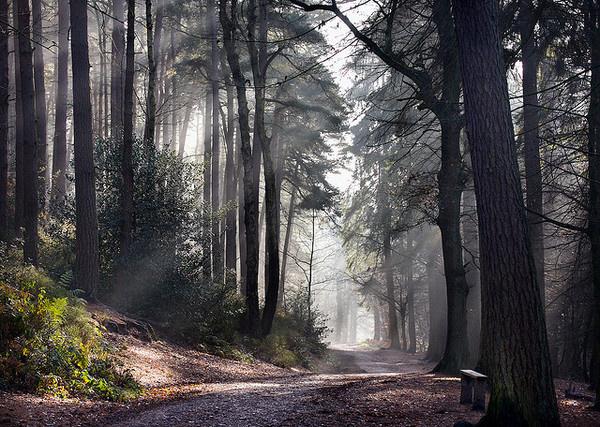 winter morning #tree #mist #autumn #morning #winter