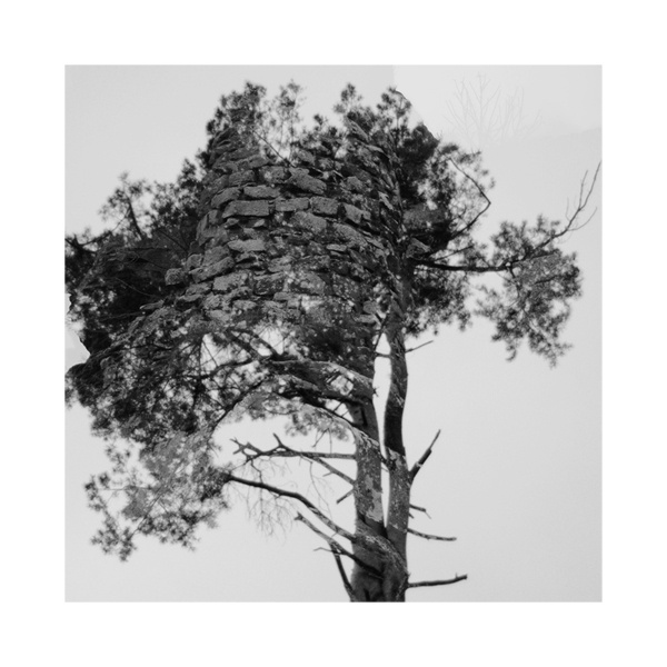 http://www.pfdfndr.de/files/gimgs/32_waldbwkl.jpg #wood #tree #white #black
