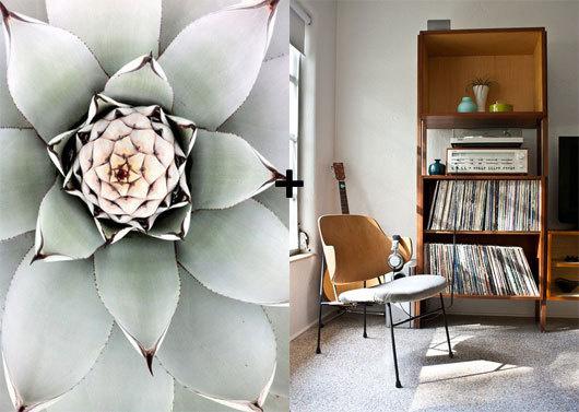 cactus plant #interior #design #decor #deco #decoration