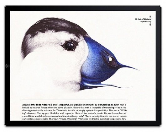 Book preview on Illustration Served #ipad #book #bird #illustration #nature #blue