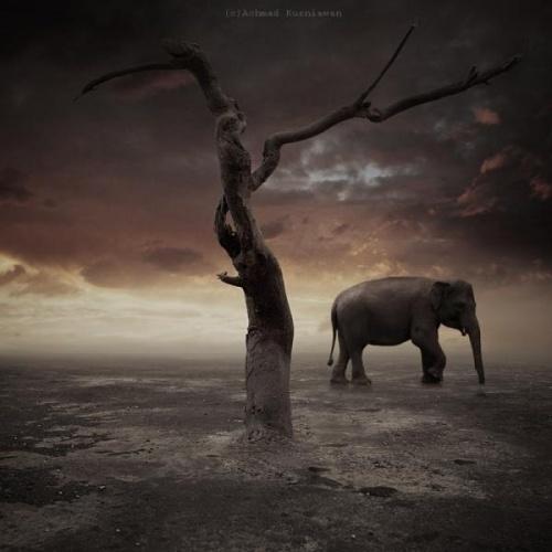 Photography by Achmad Kurniawan #photography #conceptual #inspira