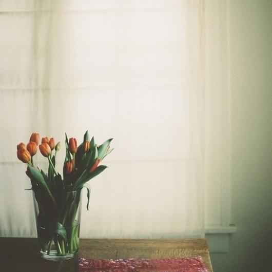 feels like spring | Flickr - Photo Sharing! #still #photography #life #film