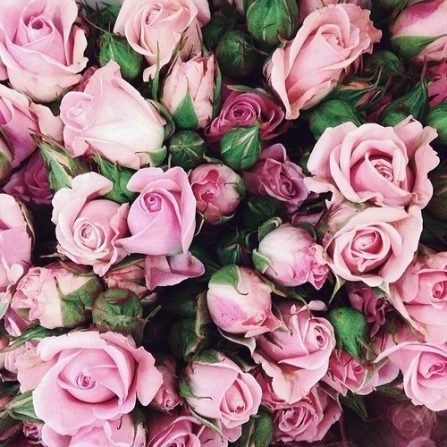 Likes | Tumblr #inspiration #roses