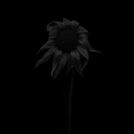MA22 #flower #photography