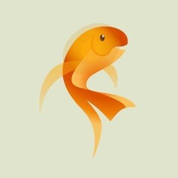 goldfish illustration #orange #illustrator #fish #goldfish