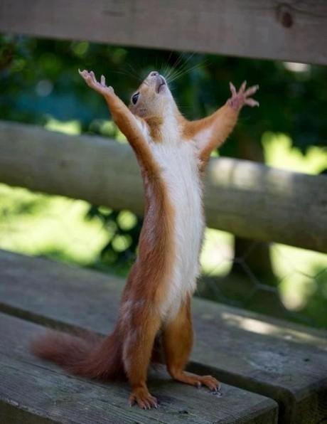???????.net #squirrel
