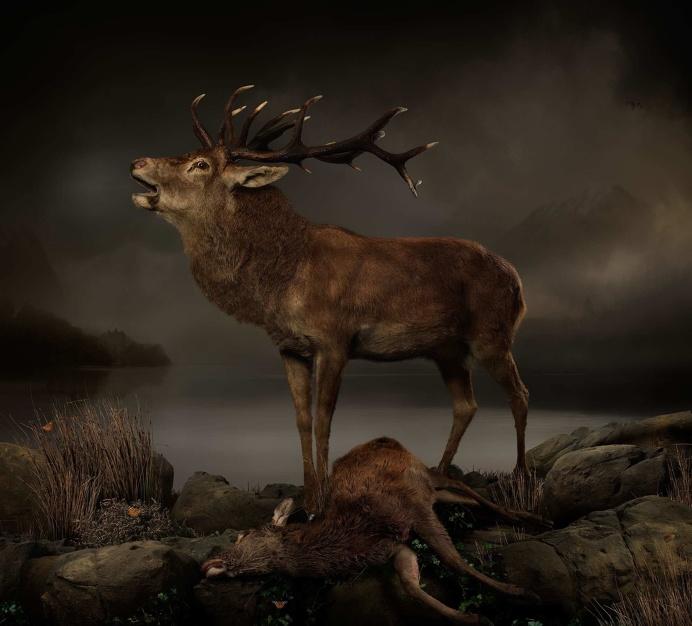 Incredible Animal Photography by Joseph McGlennon