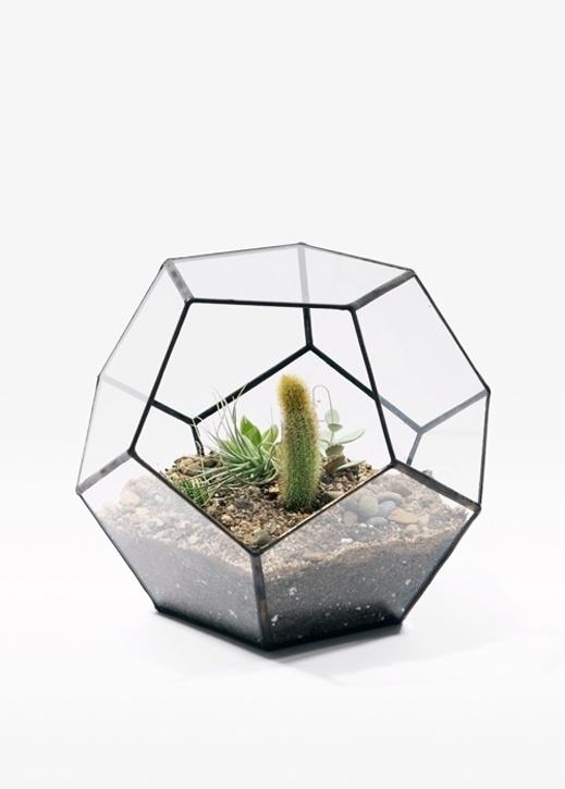 geodesic - Score+Solder #geometry #photo #terrarium #pentagon #cactus