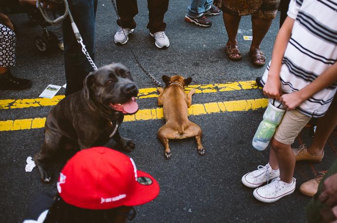 Frenchie - Brooklyn, NY #fuji #film #lazy #frenchie #dogs #clean #bulldog #french #street #nyc #fujifilm #brooklyn #dog