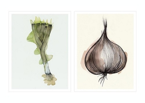 verónica ballart lilja #inspiration #onion #vegetables #illustration #ins