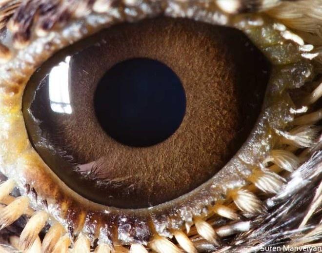 Animal Eyes by Suren Manvelyan #inspiration #photography #macro